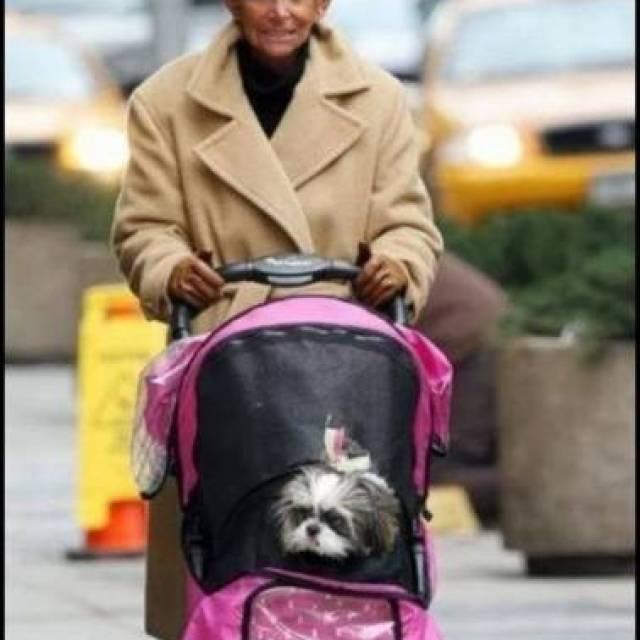 Esse cara nada fashion acha que está arrasando só porque tá levando um cachorro para passear num carrinho de bebê