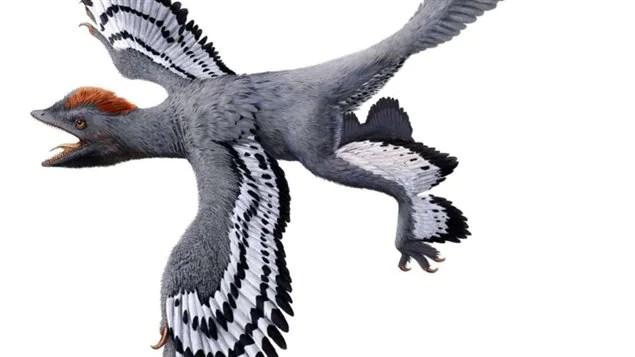 Représentation de l'Anchiornis.