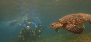 屏東》白沙尾碼頭 小琉球潛水體驗 |小琉球綠蠵龜潛水住宿|綠蠵龜與你最近距離