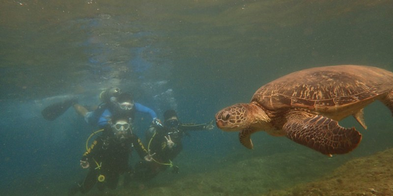 屏東》白沙尾碼頭 小琉球潛水體驗  小琉球綠蠵龜潛水住宿 綠蠵龜與你最近距離