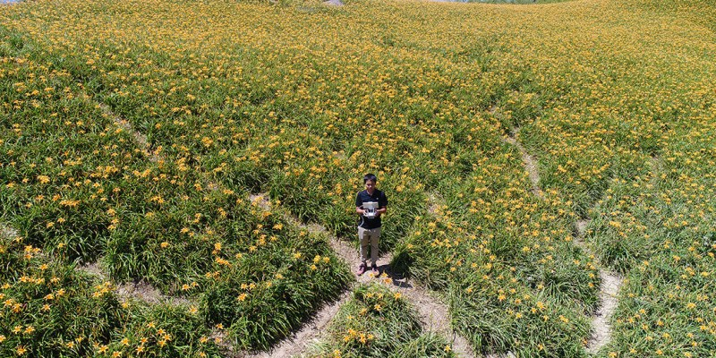 花蓮》 2018 六十石山金針花季 滿山遍野的金針花海聞名