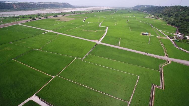 台中》外埔忘憂谷 稻田遍地翠綠景色彷彿「伯朗大道」無邊無際的稻田風景