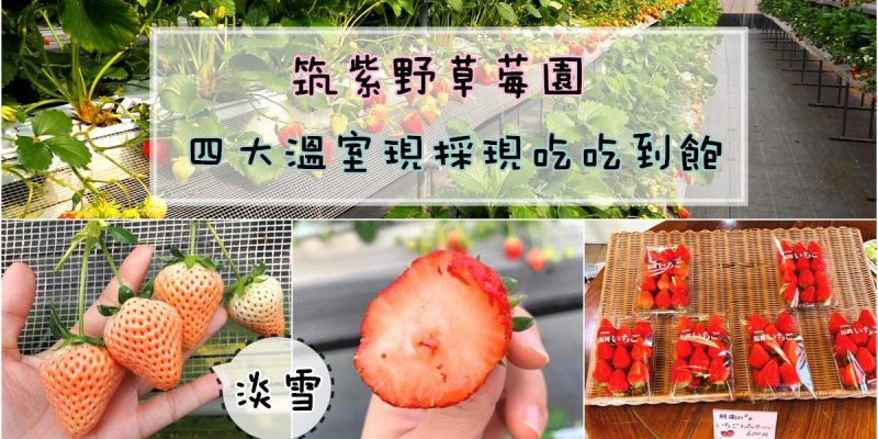 九州福岡採草莓 筑紫野草莓園草莓吃到飽 全園區草莓現採現吃 有淡雪哦!!