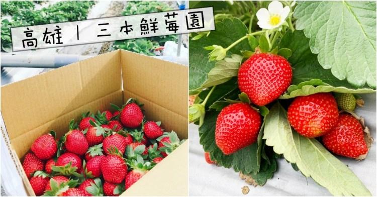 高雄採草莓   三本鮮莓園 阿蓮/大崗山 免入場費草莓園