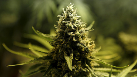 'But then I got high': Long-term pot use linked to lower income, insecurity