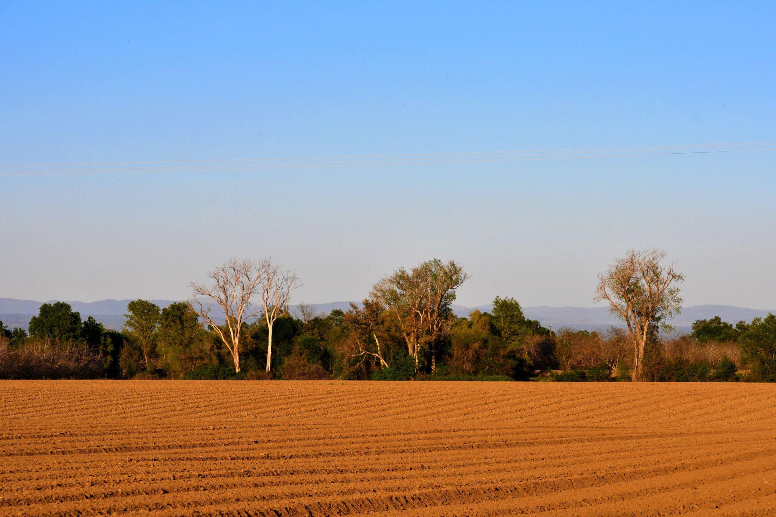 Farmland in Chico, California.