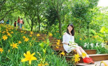 [台中/新社] 沐心泉休閒農場 @金針花海的秘密花園 (最新花況)
