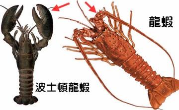 【台中美食】 波士頓龍蝦攻略 之 波士頓龍蝦到底是不是龍蝦? (廣播檔)