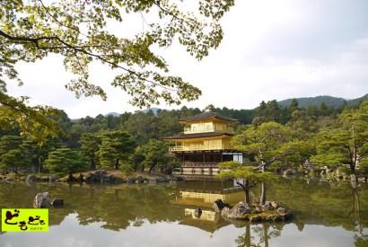 [京都]北山文化的輝煌-鹿苑『金閣寺』