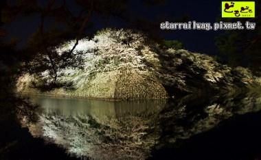 [滋賀]關西賞櫻名所-『彥根城夜櫻』