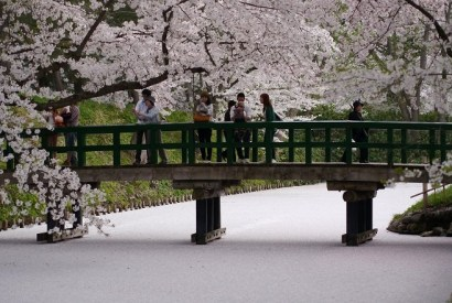 [青森]2012春祭典。弘前櫻花滯在中