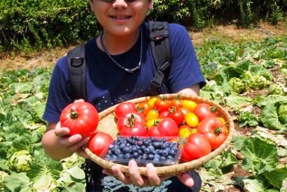 [群馬]造訪高原蔬菜的故鄉-嬬戀村DIY採高麗菜