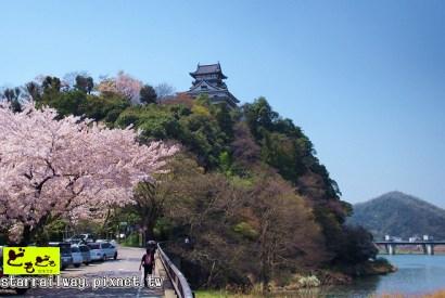 [愛知]白帝城與絕美櫻花-漫步於『國寶犬山城』的櫻花雨中