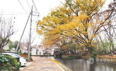 靜岡伊豆自駕之旅D5-三嶋大社、三島湧水、大社の杜、雜貨店「sora」