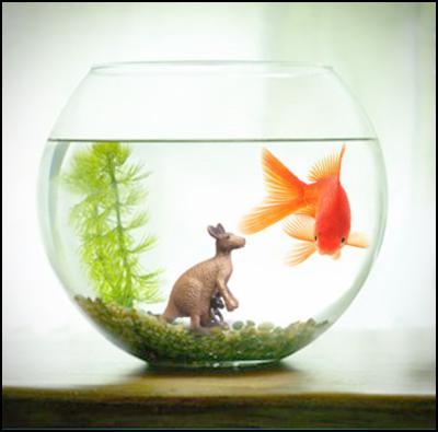 nz on air, australia, goldfish, kangaroo