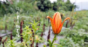 根田農業 江玉寶有機農場  誠意滿滿的山高漿有機山苦瓜茶包 食用百合兩度登上國宴