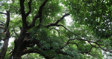 荒野。志工 | 如同阿凡達生命樹的梅川千年老茄苳