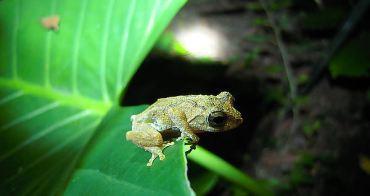 生活。手札   生物多樣性-兩棲課程