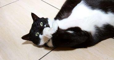 貓事。趣聞   一張試紙很難擺平啊~