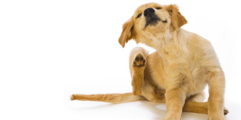 【寵物】微晶娜寵物抑菌清耳液 毛孩的耳道保養就交給他!