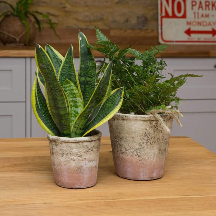 Stupid Egg Interiors Pastel Pink Rugged Vintage Style Planter / Pot, No 172