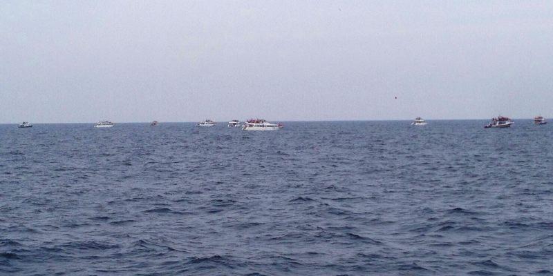 沖繩冬天就是賞鯨玩蝦密激推冬天限定超值賞鯨船