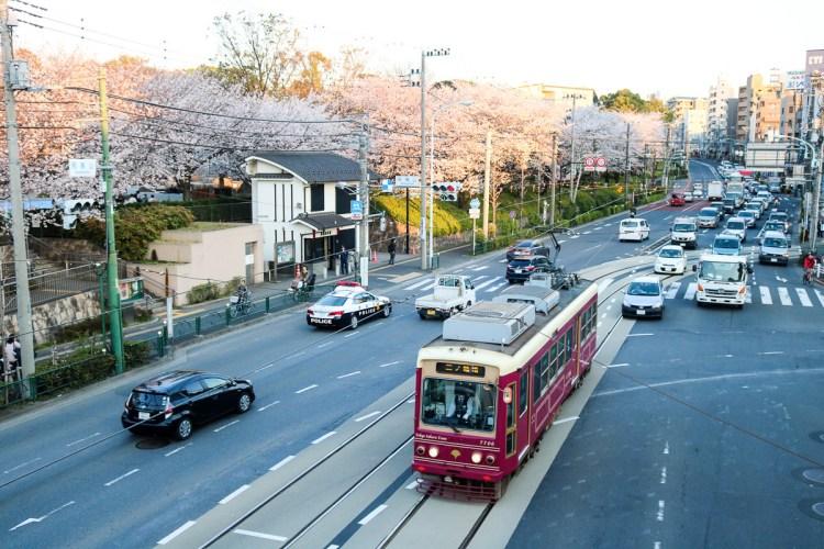 東京賞櫻景點 王子飛鳥山公園避開人潮追櫻好地方順便吃黑松銅鑼燒