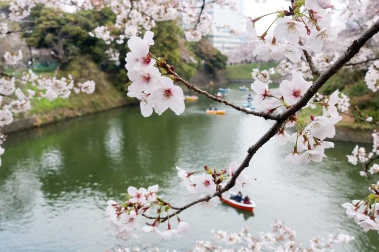 千鳥淵綠道 東京賞櫻散步遊船知名景點 就在皇居旁