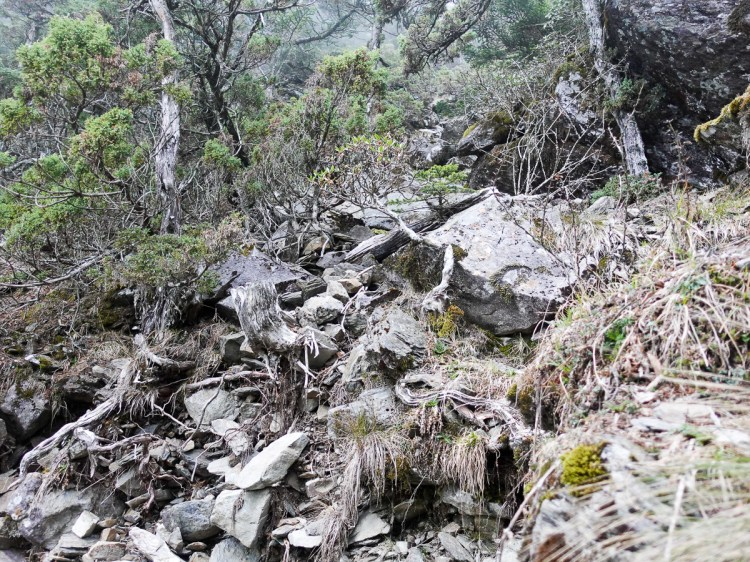 北部百岳練習場 從步道開始在不同海拔狀態登山鍛鍊體力