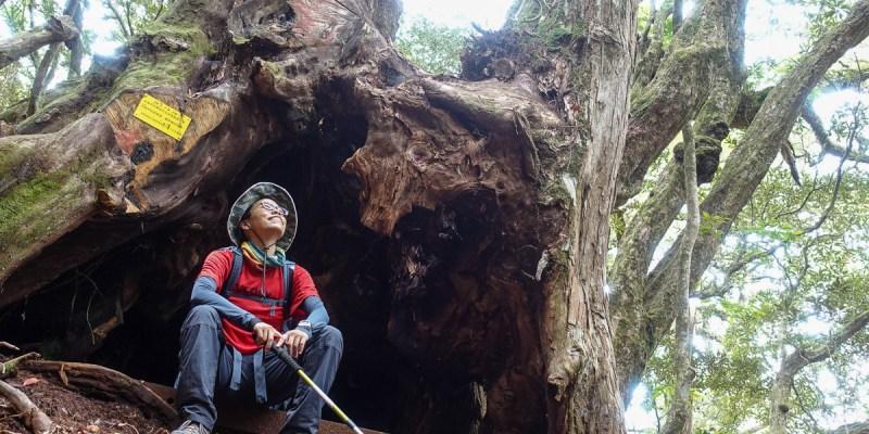 塔曼山登山步道 新北第一高峰拉拉山隔壁 氣氛滿點魔幻森林