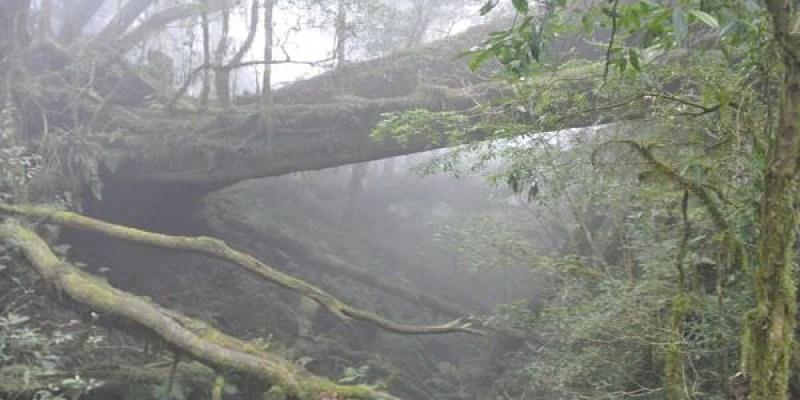 《宜蘭》輕鬆走馬告 神木生態之旅 只緣身在此山中