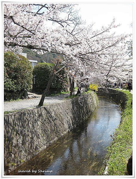賞花遊日本 Day2-京都銀閣寺與哲學之道~櫻花怎麼拍都美
