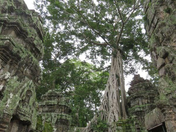 吳與倫比。柬埔寨。吳哥窟之花 塔普倫寺 Ta Prohm。不曾離開過的古墓奇兵