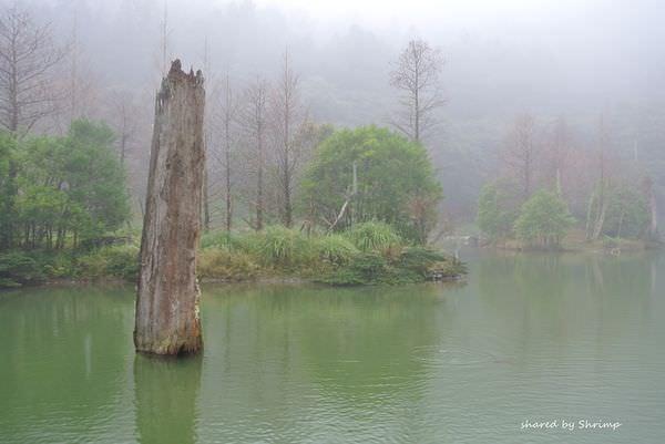 《宜蘭》輕鬆走馬告 明池森林遊樂區 霧中仙鄉