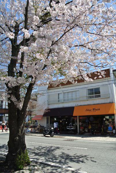 長野輕井澤。所謂的五月櫻~鐵馬趴趴走