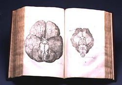 "Thomas Willis' book ""Cerebri Anatome"" open showing the engravings of the human brain (left Page) and of the sheep brain (right page). Click image to expand."