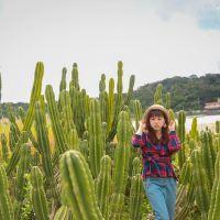沖繩IG熱門打卡景點,サボテン畑 - 路邊的巨大仙人掌拍出墨西哥風情