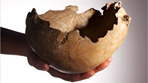 Un des crânes ayant servi de coupe, trouvé à Gough's Cave, dans la région du Somerset, en Angleterre