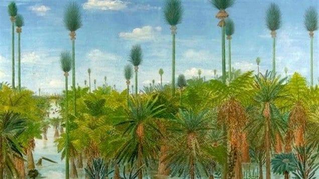 Impression artistique de la forêt découverte