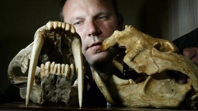 Le Dr Stephen Wroe et des fossiles d'animaux à dents de sabre