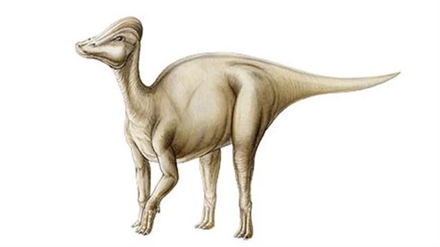 Reconstruction de Amurosaurus riabinini
