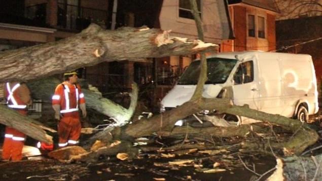 Un arbre brisé dans une rue de Toronto.
