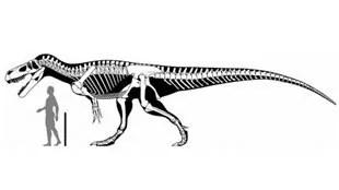 Le Torvosaurus gurneyi
