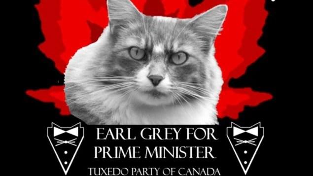 Le chat Earl Grey veut que vous votiez