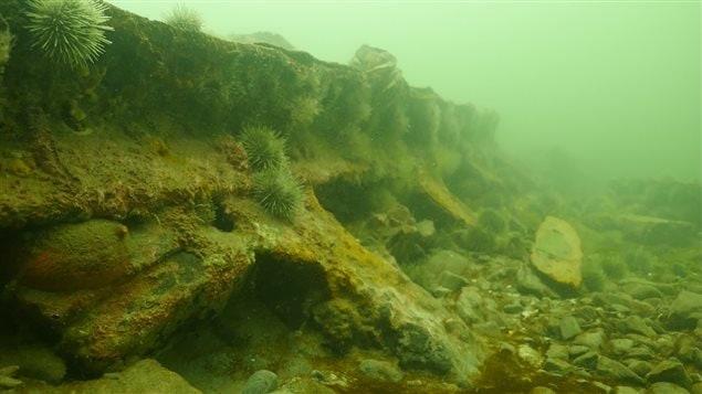 En 2014, Samuel Côté a découvert une épave située au large de Sainte-Flavie. Il s'agit du Viking, qui a sombré en 1874.