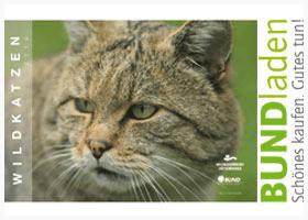 Der Kalender des Wildkatzendorfes Hütscheroda zeigt die wilden Tiger Deutschlands und begeistert damit nicht nur Katzenfreund*innen.