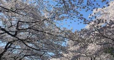 日本。東京 | 上野恩賜公園:春天經典賞櫻花好去處