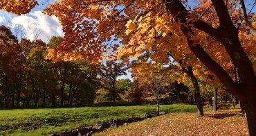 北海道   札幌《真駒內公園》探訪深秋限定的絕美賞楓景點