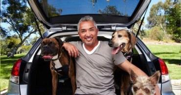 「報告狗班長」教會我的事,另類教育養狗知識的美國節目