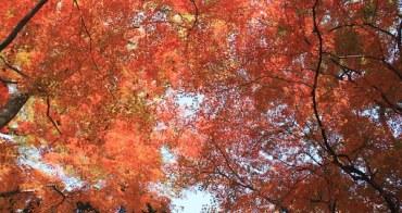 日本 | 嚴選京都9大紅葉景點,深秋來趟楓景之旅